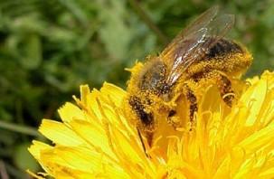 La pollinisation : Acteur principal de la biodiversité